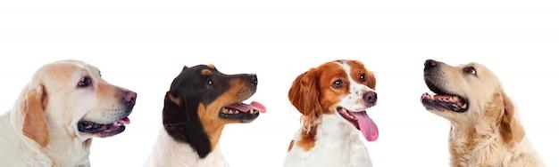 Four differents dogs Premium Photo