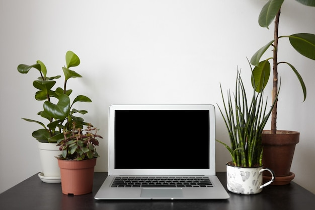 Four plant pots and open notebook pc with black screen on desk. Free Photo