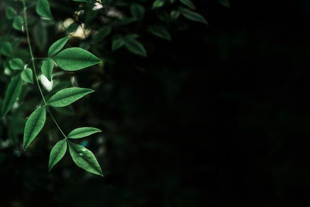 Fragile leaves on black background Free Photo