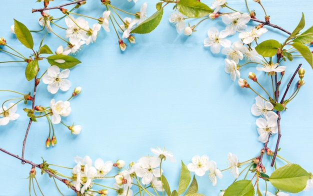 Frame border of spring blossom on blue background. springtime flowers with place for text. mother's day concept Premium Photo