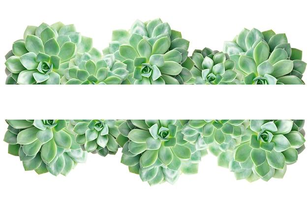 Frame of cactus succulent plant isolated on white Premium Photo