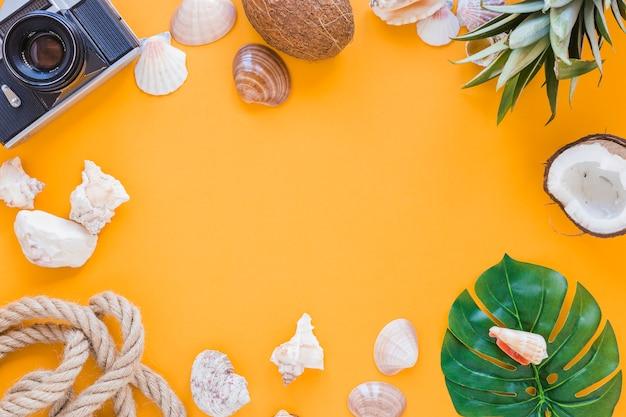Frame of camera, shells and fruits Free Photo