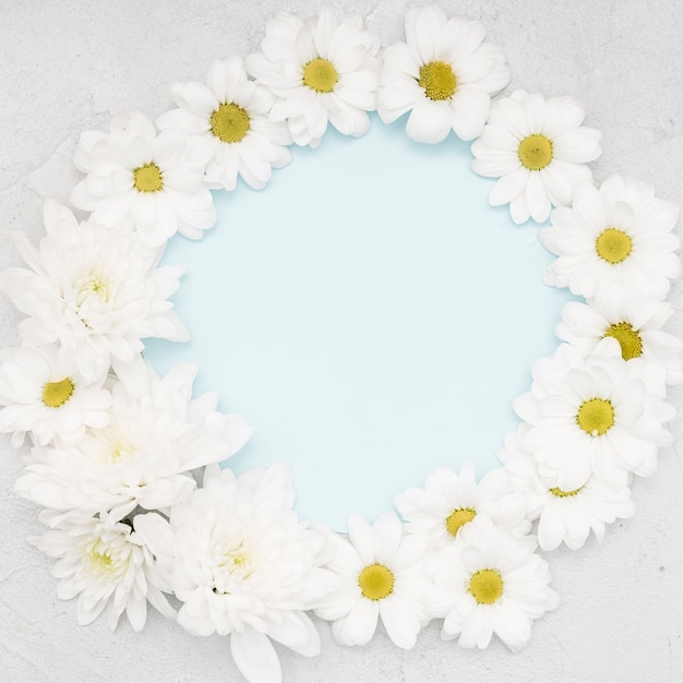 Frame of daisies and copy space Free Photo