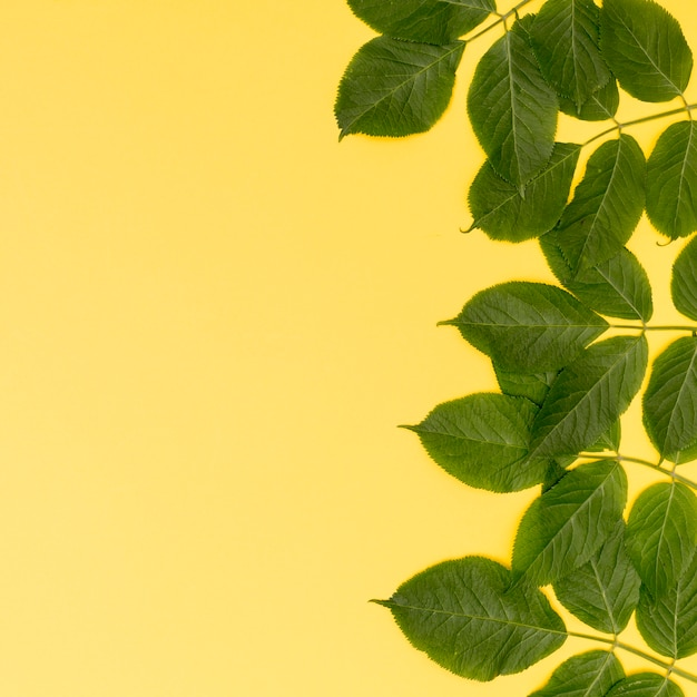 Frame of leaves with yellow background Free Photo