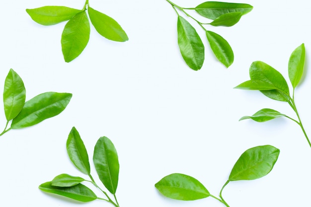 Frame made of citrus leaves on white background. Premium Photo