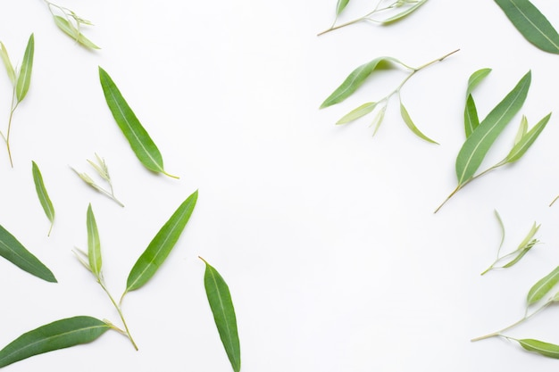 Frame made of eucalyptus leaves on white  background. Premium Photo