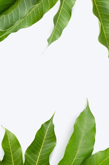 Frame made of mango leaves on white background. Premium Photo