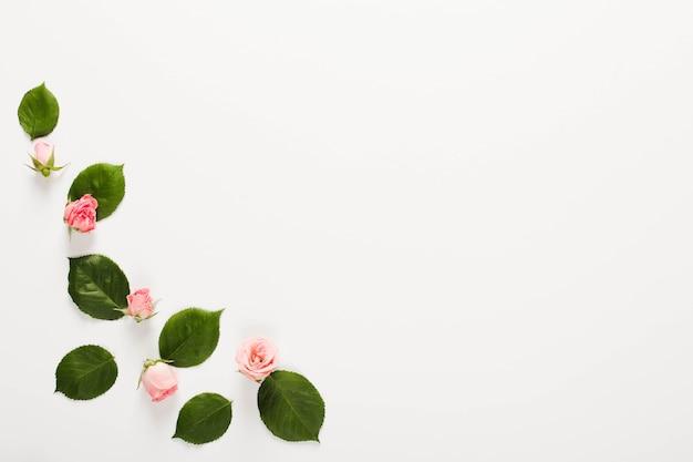 흰색 배경 위에 작은 아름다운 장미 꽃 봉오리로 만든 프레임 프리미엄 사진