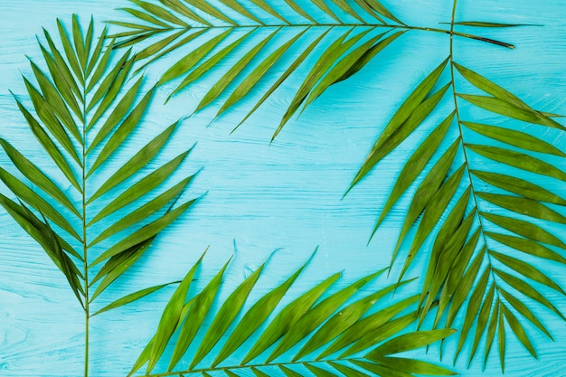 Frame of plant leaves on board Free Photo