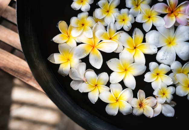 Frangipani flowers at a spa salon Free Photo