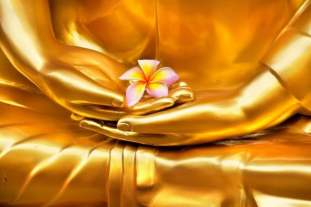 Frangipani in hand of image buddha. hand of  buddha meditation statue at thai temple. Premium Photo