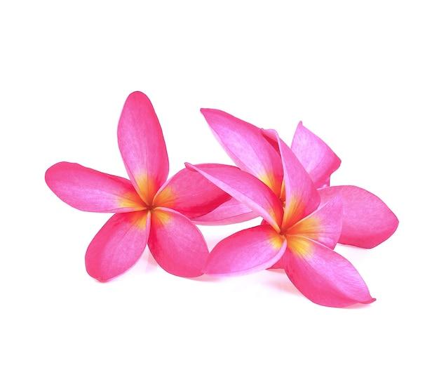 白地にフランジパニ(プルメリア)の花 Premium写真