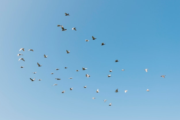 Freedom concept with flying birds Premium Photo