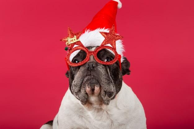 Bulldog francese con un cappello di natale e divertenti occhiali da sole sul rosso Foto Gratuite