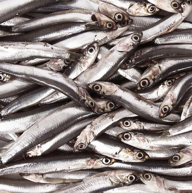 Fresh anchovies Premium Photo