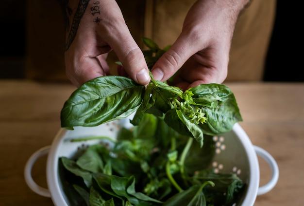 Fresh basil from the garden Premium Photo