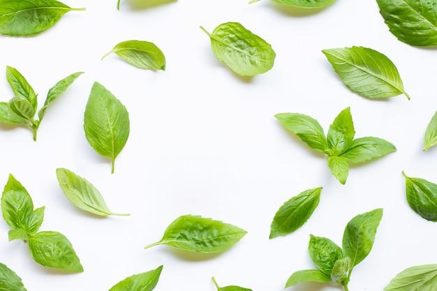 Fresh basil leaves on white. background Premium Photo