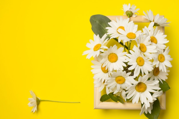 Fresh beautiful daisy flowers between frame Free Photo