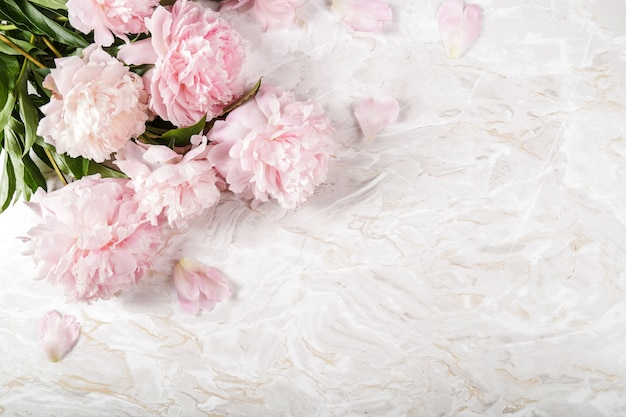 Fresh beautiful peony flowers Free Photo