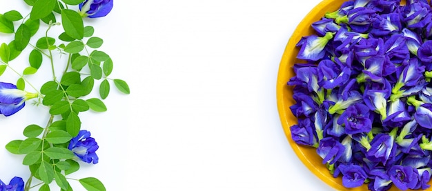 Fresh butterfly pea flower or blue pea on  white background. copy space Premium Photo