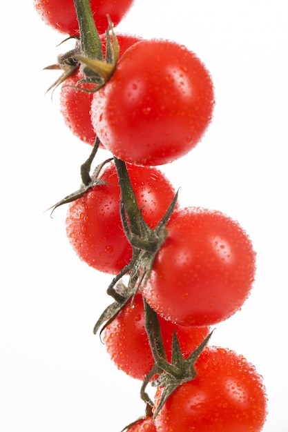 Fresh cherry tomatoes on a branch Free Photo