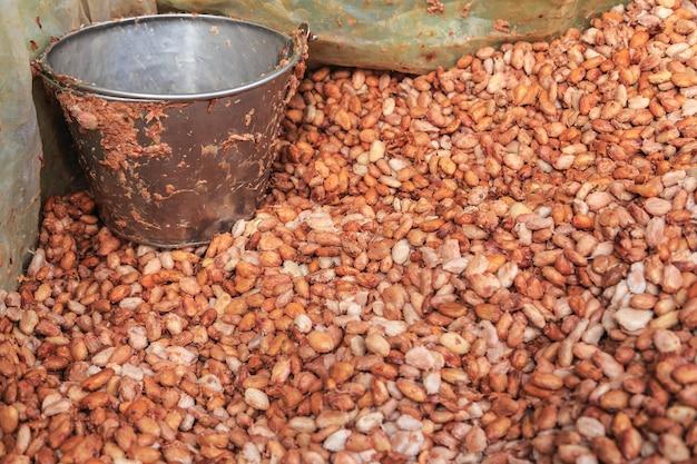 新鮮なカカオ豆と新鮮なカカオの種をバケツに入れてチョコレートを作る Premium写真