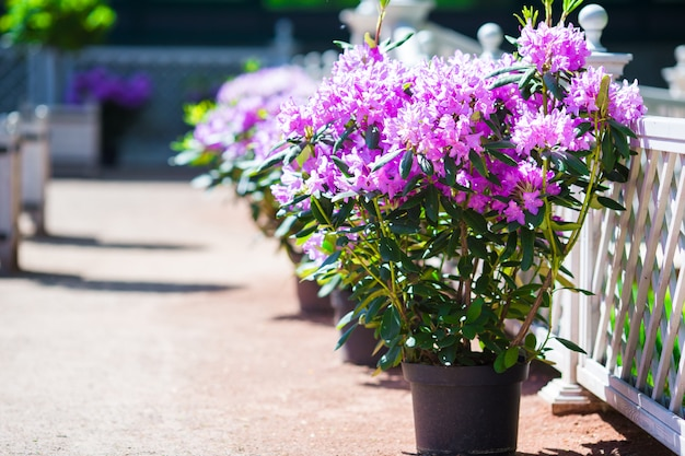 Fresh colorful blooming flowers in spring garden Premium Photo