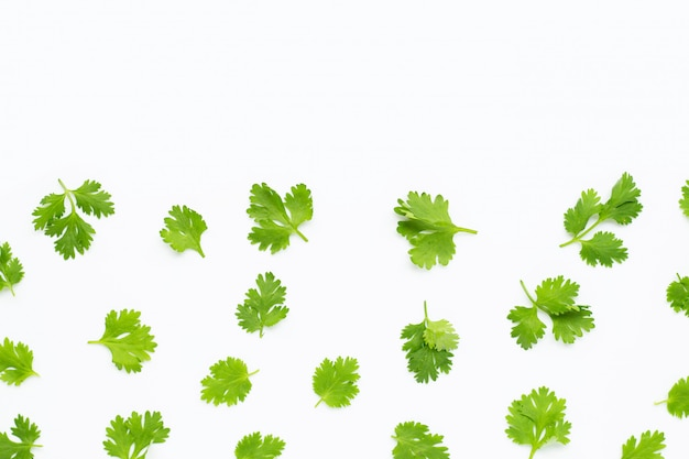 Fresh coriander leaves on white. Premium Photo