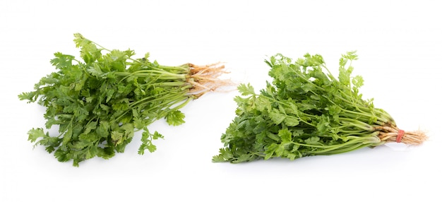 Fresh coriander leaves Premium Photo