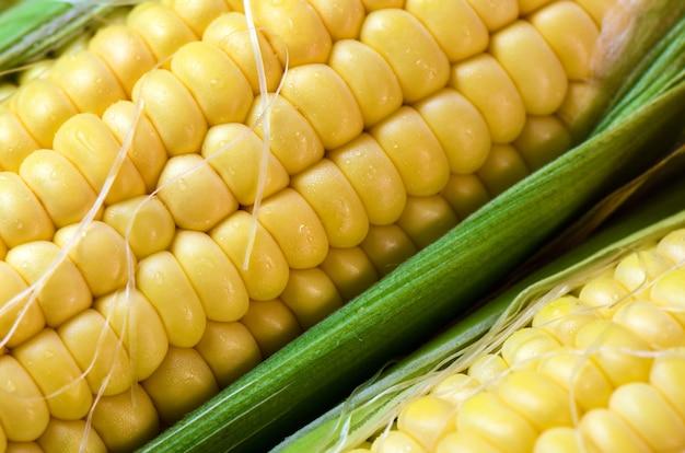 Fresh corn cobs close up. Premium Photo