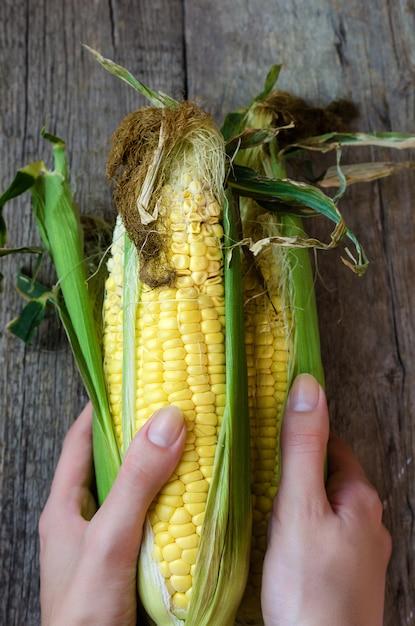 Fresh corn cobs on wooden Premium Photo