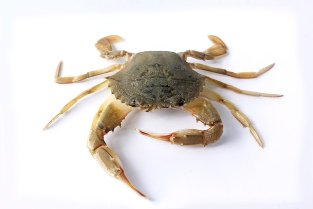 Fresh crab Premium Photo