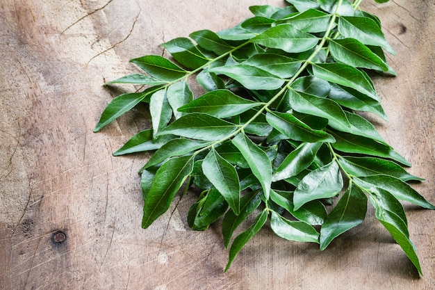 Fresh curry leaves on wood Premium Photo