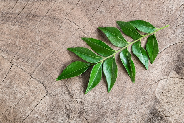 Fresh curry leaves on wooden background Premium Photo