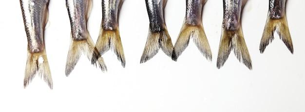 Fresh delicious fish on white Free Photo