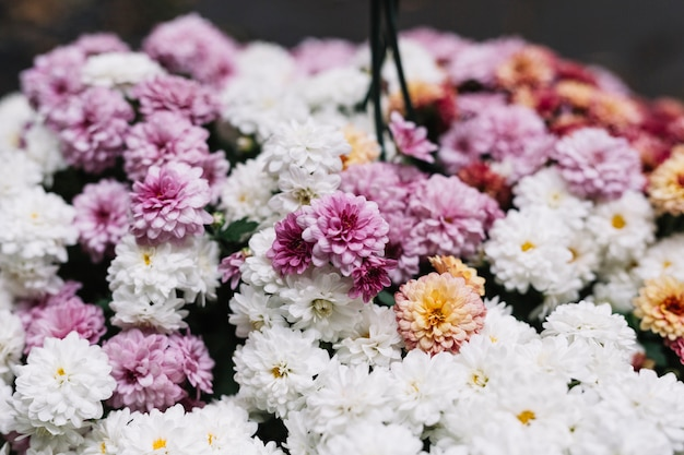 Fresh different aster flowers in bloom Free Photo