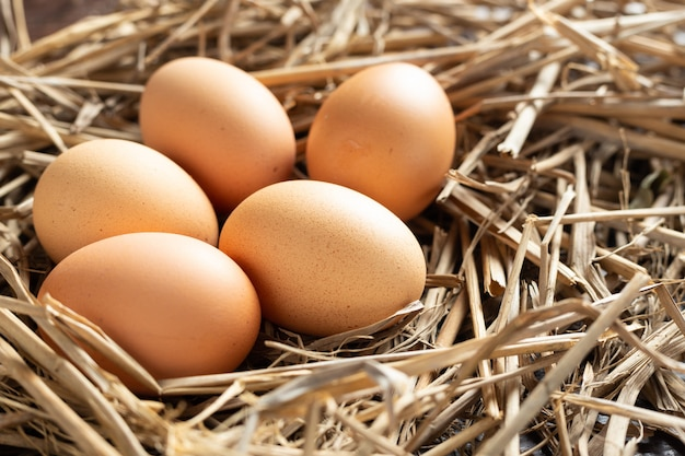 Fresh egg from chicken. Free Photo