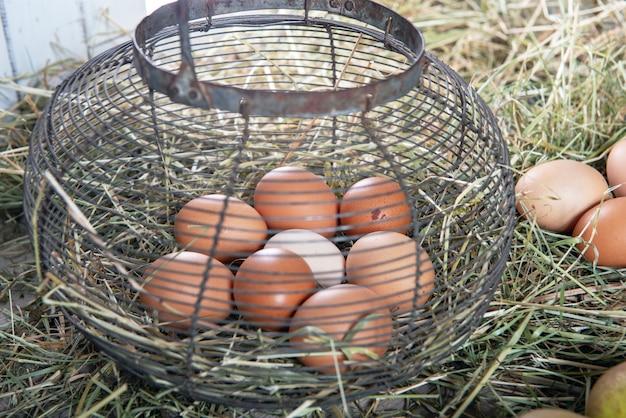 Fresh farm eggs in wire mesh basket on the straw Premium Photo
