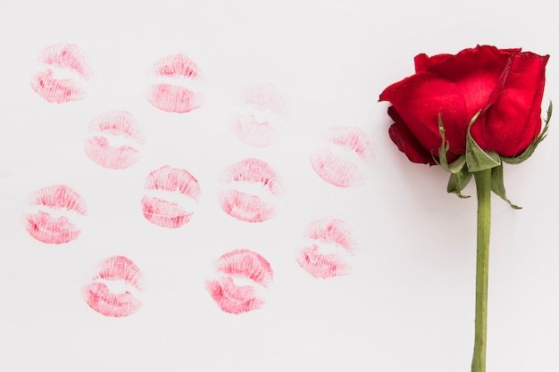 Fresh flower and lipstick kiss on paper Free Photo