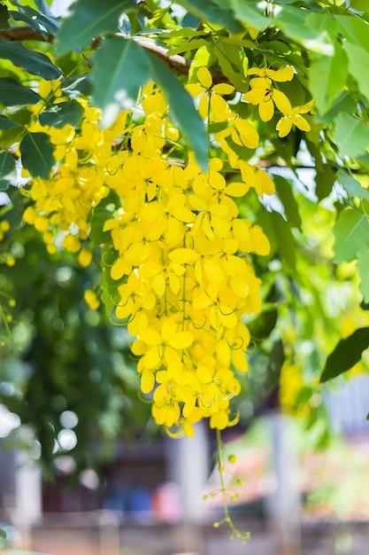Fresh flowers are golden yellow Premium Photo
