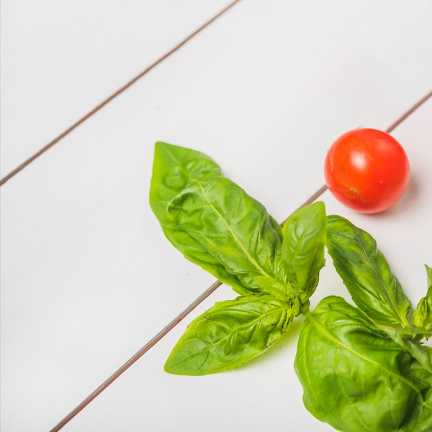 Fresh green basil leaves with single red whole tomato Free Photo