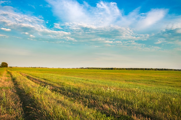 Fresh green field and blue sky in spring Premium Photo