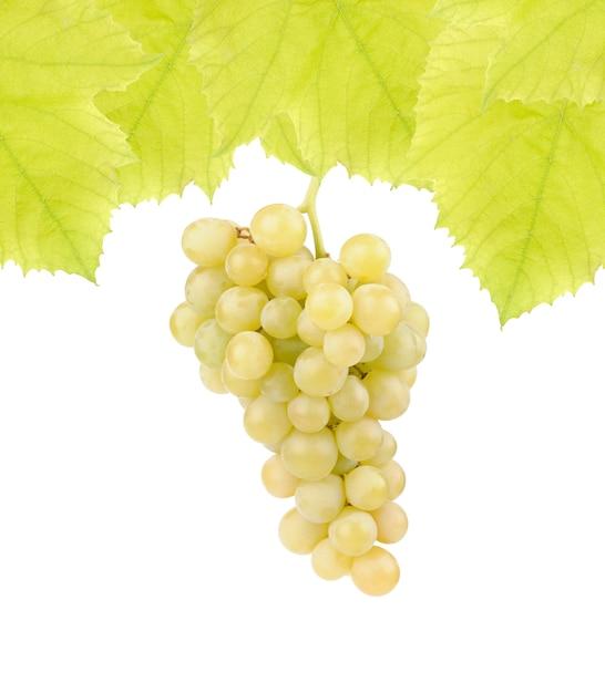白に分離された葉を持つ新鮮な緑のブドウ 無料写真