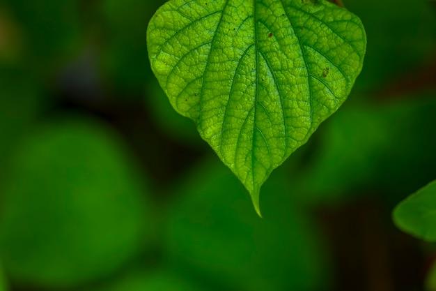 新鮮な緑の葉の背景 Premium写真