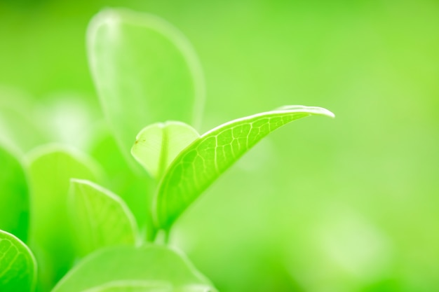 Fresh green leaf close-up Premium Photo
