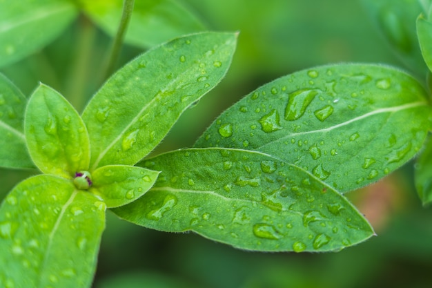 Fresh green leaf with rain drop background Premium Photo
