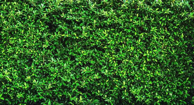 新鮮な緑のまま背景テクスチャ Premium写真