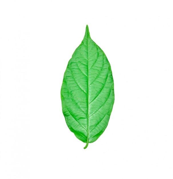 Fresh green leaves isolated on white Premium Photo