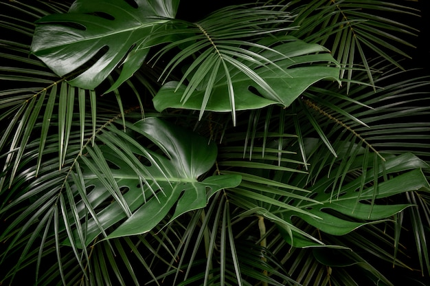 Premium Photo Fresh Green Monstera And Palm Leaves Close Up View In Tropical Rainforest In a tropical rainforest biome, there are several characteristics that have been identified. https www freepik com profile preagreement getstarted 8327196