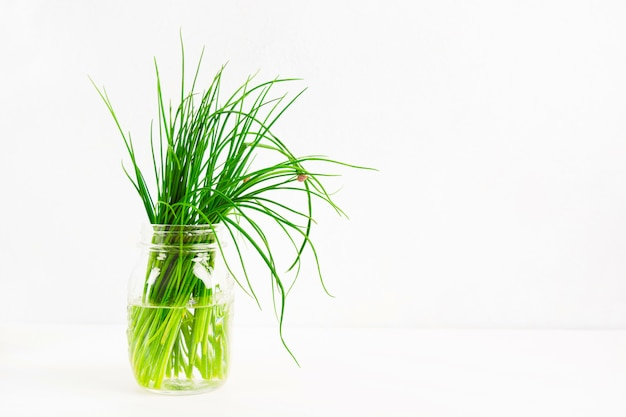 Fresh green onion in the glass jar on white background with copy space Premium Photo